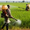 Brasil é campeão mundial do consumo de agrotóxicos desde 2009