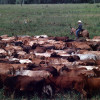 Walmart começa a vender carne sustentável da Amazônia em SP e no CO