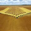 Nova previsão da safra recorde: entre 223/224 milhões de toneladas de grãos
