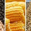 Safra brasileira tem novo recorde histórico: 232 milhões de toneladas