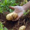 O que é Agricultura Orgânica?