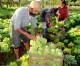 Agricultura orgânica cresce no Brasil  e já conta com 6.720 produtores