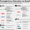Grupo seleto de empresas controla o mercado global de transgênicos