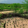 Técnicas para armazenar água e produzir alimentos ajudam a viver no Semiárido do Ceará