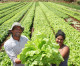 Pesquisa constata que produtor orgânico brasileiro é inovador e qualificado
