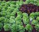 Mercado brasileiro de orgânicos deve movimentar R$ 2,5 bi em 2016