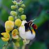 Abelhas e  polinizadores: caminho para agricultura sustentável aumentar a oferta de alimentos no mundo