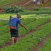 """PL dos Venenos quer chamar agrotóxico de """"controle ambiental"""" e ameaça saúde e alimentação"""