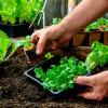 Curso gratuito online ensina como fazer horta caseira