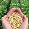 Biodiesel agrega valor à produção do Mato Grosso