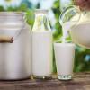 Brasil saltou de grande importador de leite para o quarto maior produtor mundial