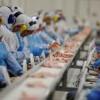 No PR, carnes de frigoríficos investigados  passam no primeiro teste. Penas mais severas para coibir fraudes