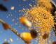 Safra recorde brasileira deve produzir 242,1 milhões de toneladas de grãos, aponta Conab