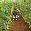O agrônomo que virou orgânico da terra