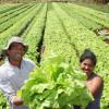 Em 7 anos, Brasil triplica o número de agricultores orgânicos registrados