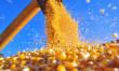 Safra brasileira recorde de grãos deve atingir 240,7 milhões de t