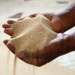 Teff: o grão etíope que começa a chamar a atenção do mundo