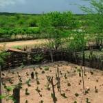 Técnicas para armazenar água e produzir alimentos ajudam a viver no Semiárido