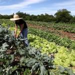 Para ONU, agricultura convencional não combate a fome