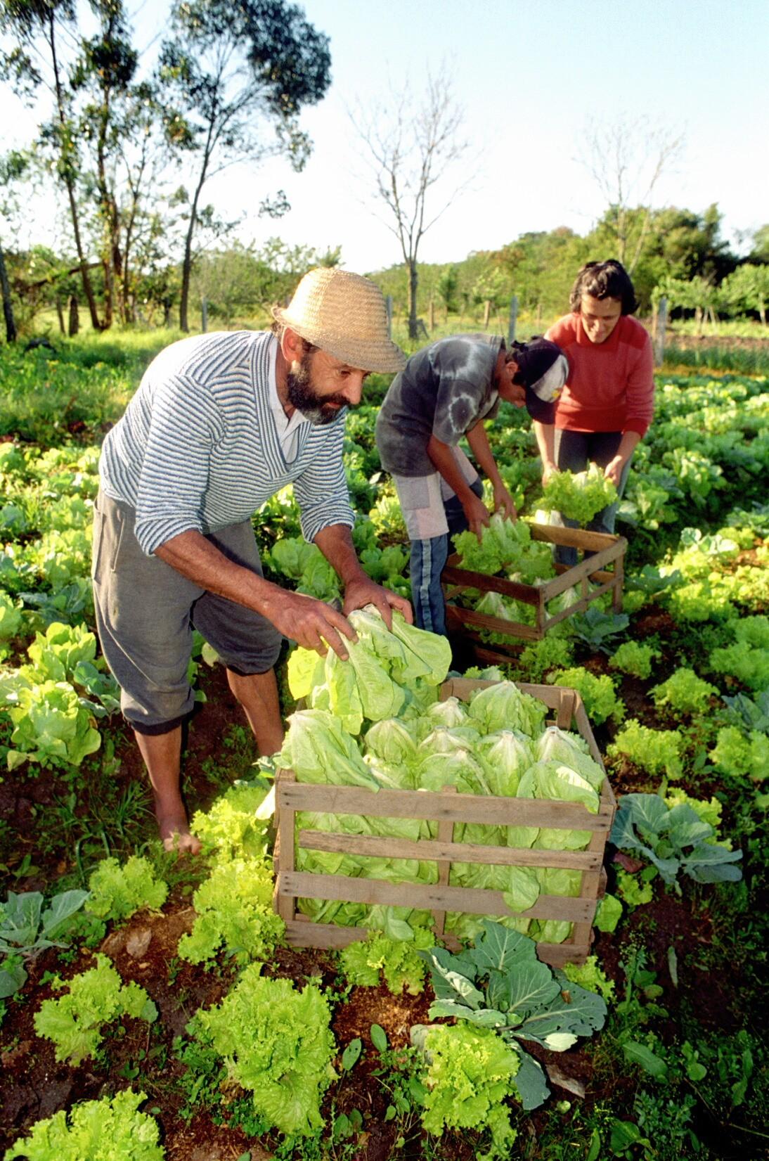 alimentos-organicos-0111