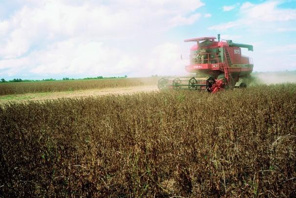 Plantação de soja da Monsanto. Empresa terá de ressarcir produtores por cobranças indevidas (Foto: Divulgação)