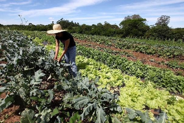 Produtora agroecológica no Rio Grande do Sul (© Rodrigo Baleia / Greenpeace