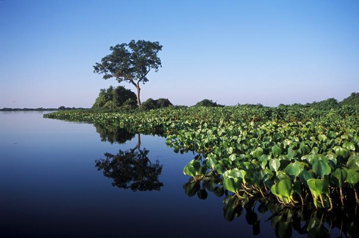 Parque Nacional do Pantanal, Mato Grosso