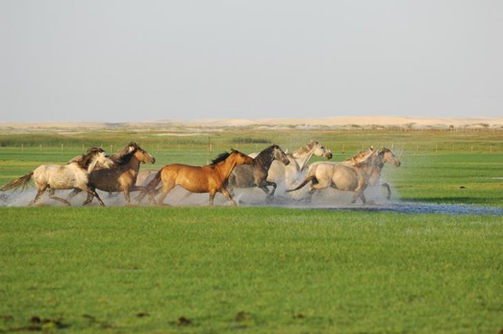 Criação de cavalos, campos inundáveis, Mostardas, Rio Grande do Sul