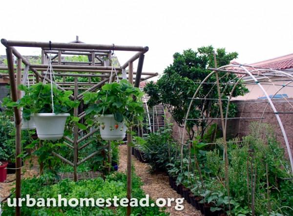 Em cerca de 400 m², são produzidas mais de 3 toneladas de alimentos orgânicos por ano para alimentar a familia e gerar renda extra.