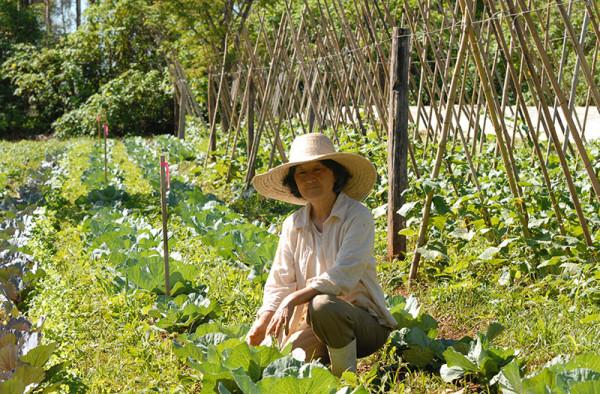 Produção orgânica de hortaliças. Foto: Divulgação