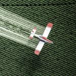 Transgênicos e agrotóxicos: uma combinação letal
