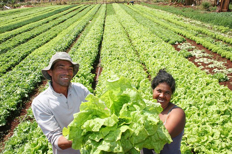 Agricultores familiares são a maioria na produção de alimentos orgânicos, constata pesquisa da Unicamp. Foto: Divulgação