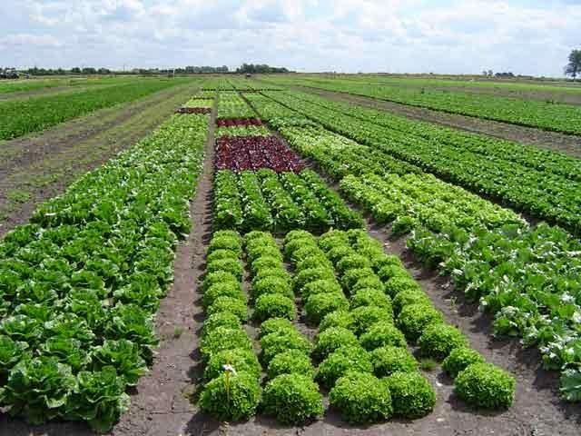 Produção orgânica vegetal e animal