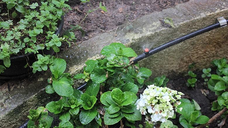 A irrigação é feita com água de chuva armazenada, distribuída em mangueiras. Tudo foi feito por ele mesmo. Foto: Lucas Alencar/Ed. Globo