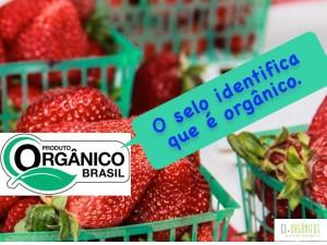 campanha-ci-organicos