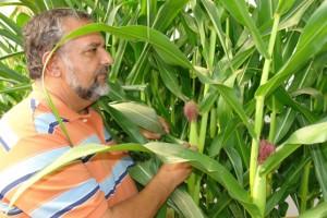 Ivan Cruz, da Embrapa Milho e Sorgo (Sete Lagoas, MG)