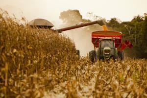 2012 / Marcelo Min / Fotogarrafa / Sinop - MT Produção recorde do milho safrinha na região de cerrado e floresta em SInop, Mato Grosso. Antônio Galvan