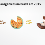 Brasil foi o país que mais cresceu o cultivo de transgênicos em todo o mundo