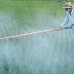 Brasil: líder mundial no uso de agrotóxicos, reduz ou zera impostos dessas substâncias e ainda permite pesticidas proibidos em outros países