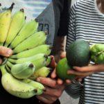 Austrália: um bairro onde moradores plantam  e colhem o próprio alimento nas ruas