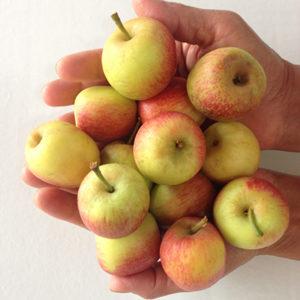 Saborosas maçãs imperfeitas.