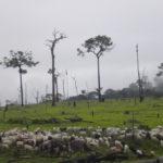 Grandes supermercados não comprarão carne de áreas de desmatamento