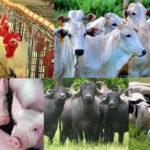 No RJ acontece evento sobre certificação orgânica animal