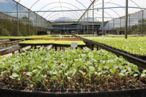 Viveiro de mudas orgânicas no Sitio Novo Mundo, Ibiúna, SP. Foto: Banca Orgânica