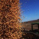 Safra de grãos recorde pode chegar a 227,9 milhões de toneladas de grãos